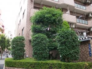 墨田区・マンション植栽管理工