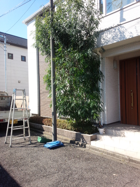 植木の取替