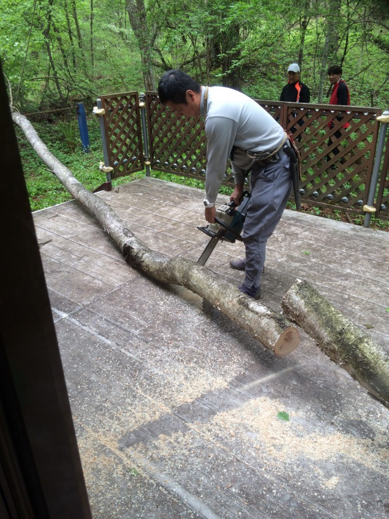 軽井沢伐採2