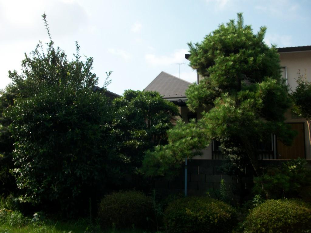 和風庭園の剪定作業