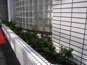 千代田区で植栽作業