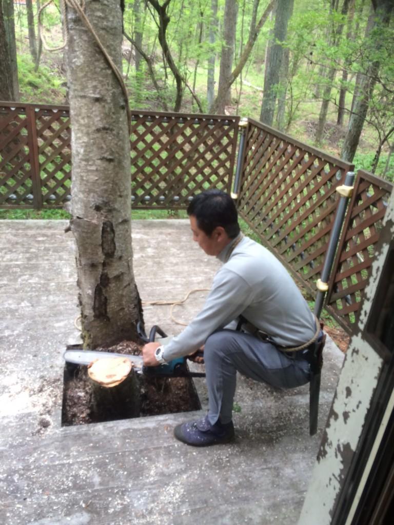 軽井沢の個人別荘にて伐採作業